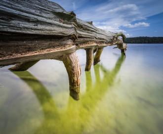 abgestorbene Bäume im Wasser,Sommer und warmes Licht auf dem See totes Holz am Ufer eines klaren,ursprünglichenSees
