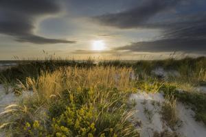 Ostsee mit goldgelben Strandhafer im Sonnenlicht